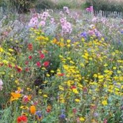 Wildflower Meadow, Airfield Estate
